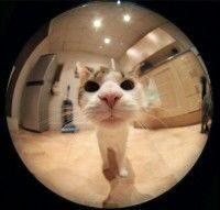 fish__cat__01