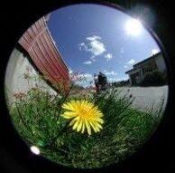 fisheye_flower.jpg